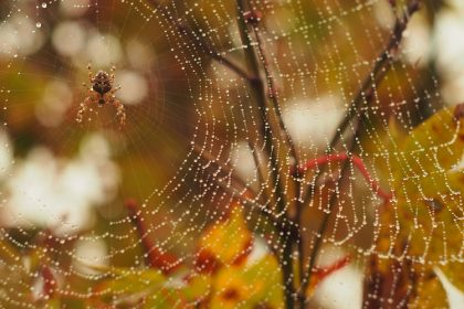 Pest Control Checklist - Croach - Kirkland, WA - Spider on web and fall leaves
