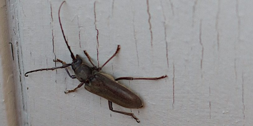 December Pest Control - Croach - Kirkland, WA - Bug in the house
