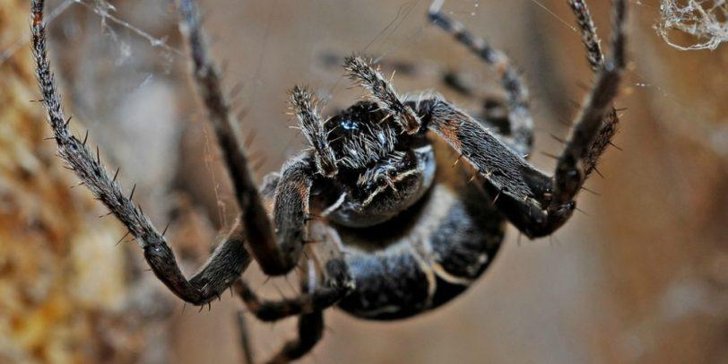 Spider Prevention - Croach - Kirkland, WA - Black spider hanging from web
