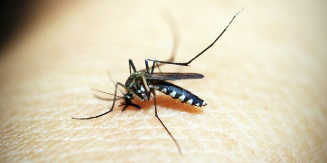 Mosquito Pest Control - Croach - Mosquito biting into skin