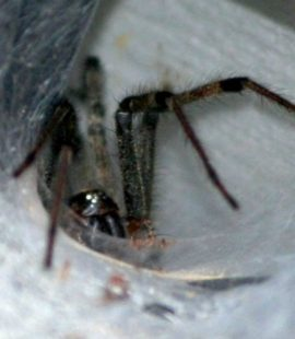 Pest Control Company - Croach - Kirkland, WA - Spider web on siding