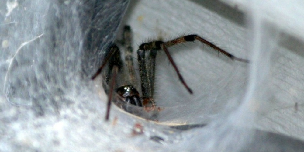 Pest Control Company - Croach - Kirkland, WA - Spider web on siding