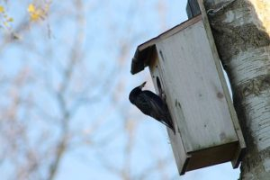 Garden Pest Control Ideas - Croach - Kirkland, WA - Bird Nesting Box on Tree