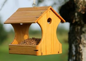 Garden Pest Control Tips - Croach - Kirkland, WA - Pine Wood Hanging Bird Feeder in Tree