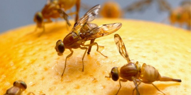 Pest Control - Croach - Seattle, WA - Fruit flies on orange