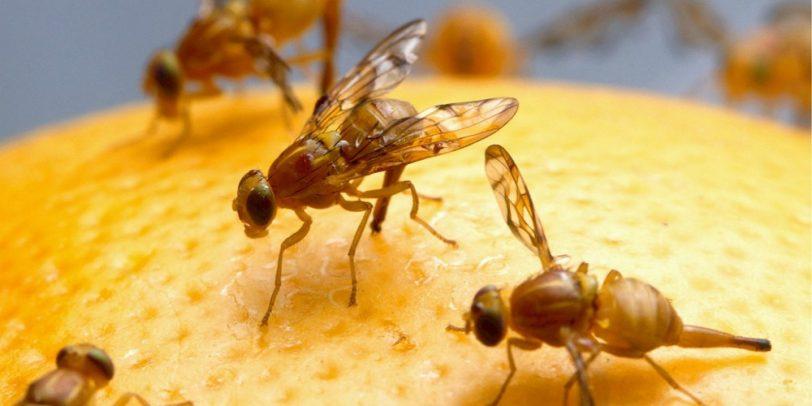 Pest Control - Croach - Seattle, WA - Fruit flies on orange