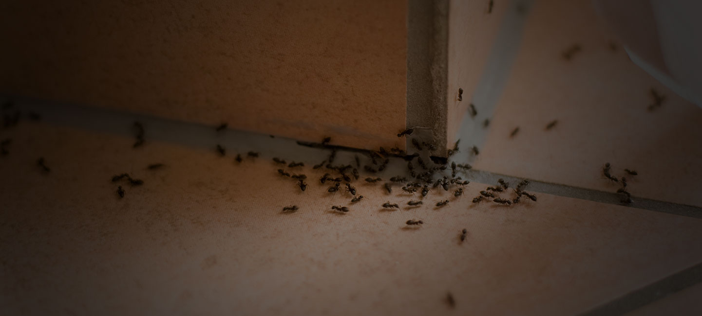 Ant Control - Ants crawling on floor and into crack - Portland, OR