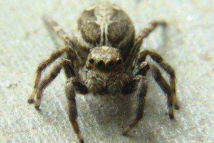 Fall Pest Control - Croach - Kirkland, WA - Close up of Brown Spider