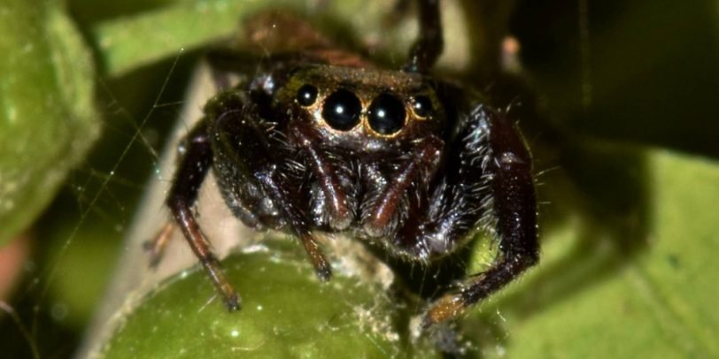 Spider Control - Seattle, WA - Fun Spider Facts - Closeup of spider