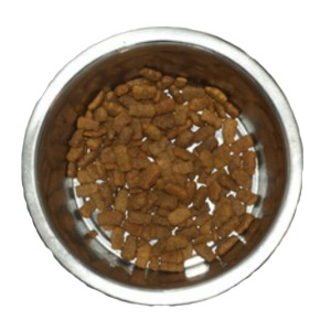 Cockroach Infestation Control - Croach - Kirkland, WA - Dog food in dish attracts pests