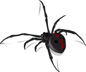 Black Widow Spider - Aurora CO Pest Control