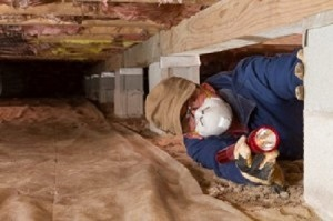 Crawl Space Contractor Integrates Rodent Control - Seattle WA