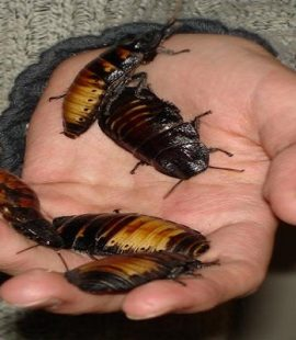 Bug Phobias - Cockroaches. Croach Pest Control, Kirkland, WA