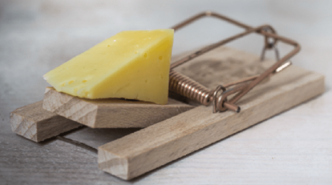 Mouse Trap With Cheese - Croach Pest Control Myths