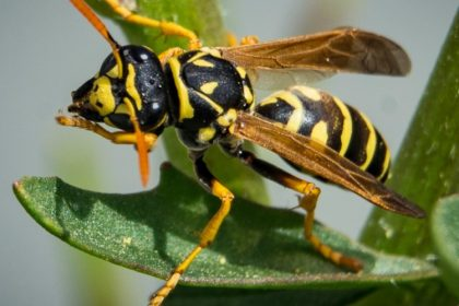 Croach - Kirkland, WA - Wasp Pest Control Myth vs Truth