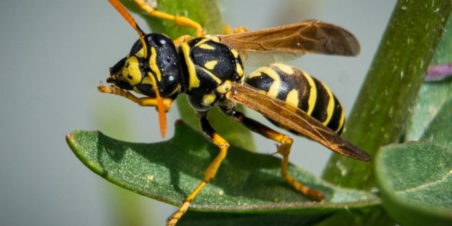 Croach - Kirkland, WA - Wasp Pest Control Myth vs Truth