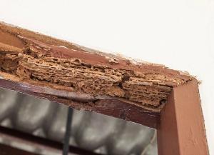 Termite Treatment - Croach - Kirkland, WA - Termite damage on exterior door frame