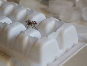 Spider Control - Croach - Kirkland, WA - Get Rid of Spider on Ice Cube Tray